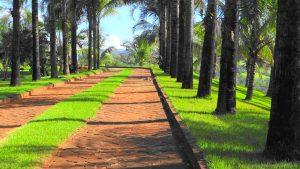 Palmeiras Naturais